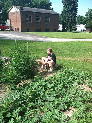 Raising beds raising kids raising communities through gardening ksu asne for Kent gardens elementary school