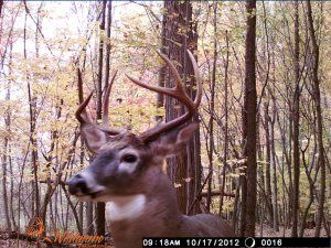 Ten-point buck captured on webcam by Dan Ross's Wilderness class, used with permission.