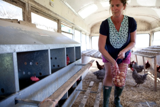 Small farmer Ami Gignac of Breakneck Acres collects eggs in the farm's inventive chicken coop. The farmers chose to convert two old buses into a mobile coop for its 300 hens in Revenna, Ohio. (photo by Stephanie Weiss)