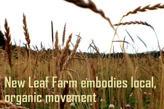New Leaf Farm_Photo5